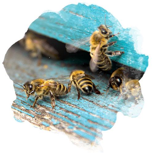 pourquoi accueillir des abeilles dans votre jardin nortene. Black Bedroom Furniture Sets. Home Design Ideas