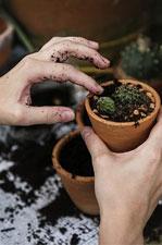 Conseils Nortene Notre Blog Donne La Parole Aux Jardiniers