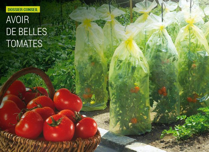 Housse de protection et serres pour tomates nortene - Comment congeler les courgettes du jardin ...
