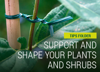 Support and shape your plants and shrubs