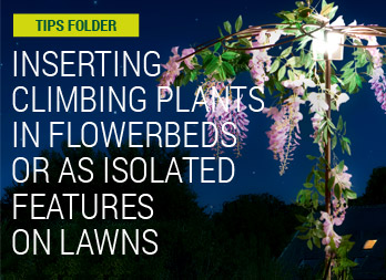 Inserting climbing plants in flowerbeds or as isolated features on lawns