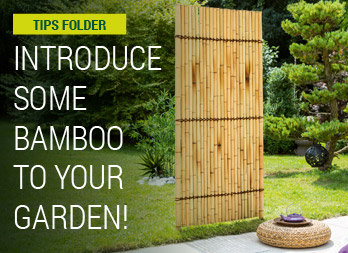 Introduce some Bamboo to your garden!