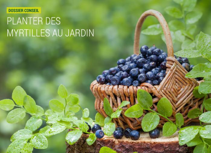 Planter des myrtilles au jardin dossier conseil nortene for Conseil plantation jardin
