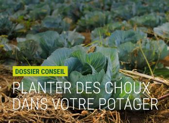 Cloche de for age avec a ration nortene - Planter des choux de bruxelles ...