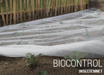 Insectennet