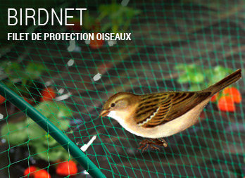 Filet de protection oiseaux