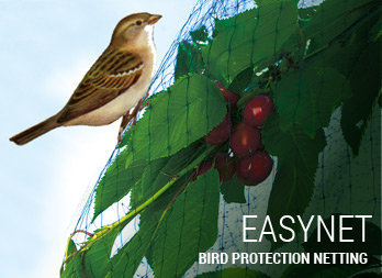 Square-mesh bird protection netting.