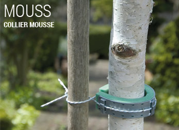 arbre fruitier robuste