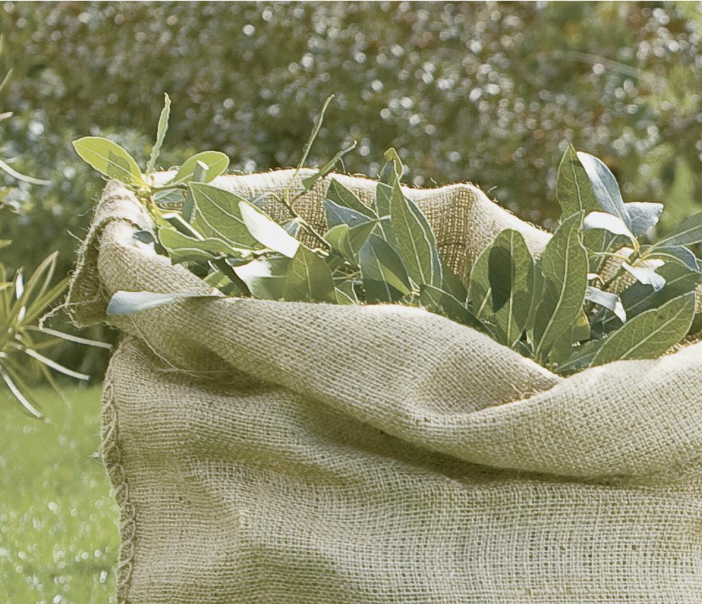 Lot 3 sacs naturels nortene for Desherbant naturel grande surface