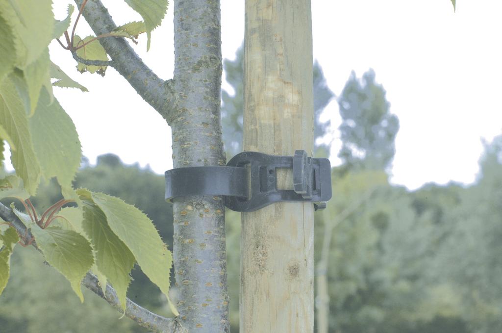 Collier arbre nortene - Arbre a collier ...