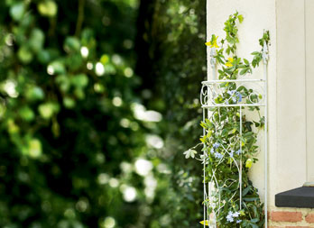 flor metal trellis m treillis planter le long d 39 un mur nortene. Black Bedroom Furniture Sets. Home Design Ideas